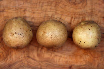Adretta Kartoffeln
