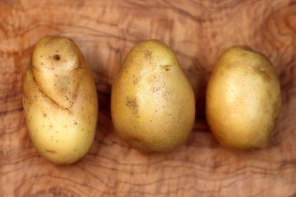 Axenia Kartoffeln