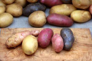 Bunte Kartoffeln vom Hof Möllering
